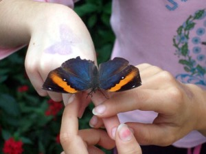 Butterfly on Child's Fingers