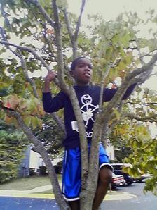 Child Climbing Tree